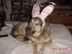 Easter Maggie